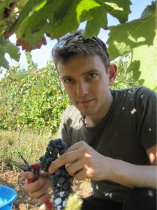 Picking grapes with a badly cut finger in France 2011 [cc-by-sa-3.0 Steve Cook]
