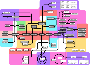 Metabolic pathways [CC-BY-SA-3.0 Zephyris from w]