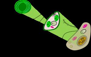 Endosymbiotic matryoshka [CC-BY-SA-3.0 Steve Cook]