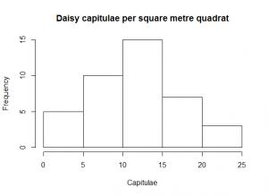 Daisy capitulae histogram [CC-BY-SA-3.0 Steve Cook]