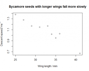 Sycamore seeds scatterplot [CC-BY-SA-3.0 Steve Cook]