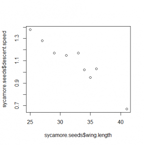 Sycamore seeds x vs y syntax [CC-BY-SA-3.0 Steve Cook]