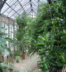 Amsterdam botanical gardens [CC-BY-2.0 Alex Lomas]