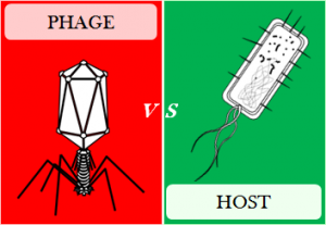 Phage vs. host [CC-BY-SA-4.0 Steve Cook]