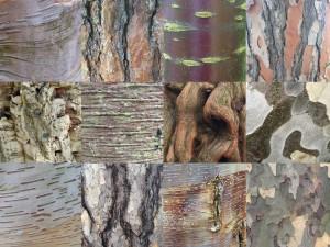 Bark [CC-BY-SA-3.0 Steve Cook]