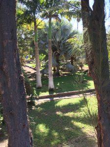 Maspalomas botanic gardens [CC-BY-SA-4.0 Steve Cook]