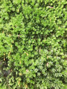Wakehurst mosses [CC-BY-SA-4.0 Steve Cook]